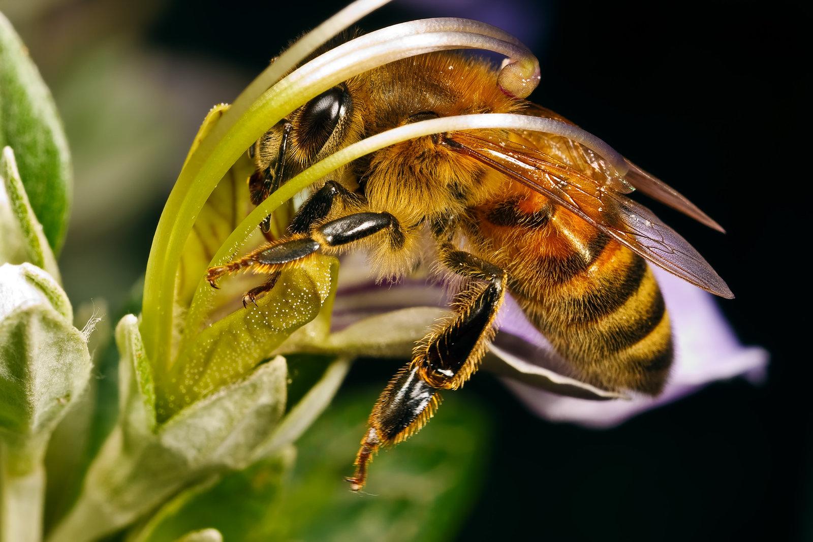 Посмотреть на пример ухода за пчелами