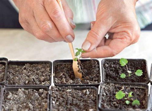 Как сажать семена в квартире 1