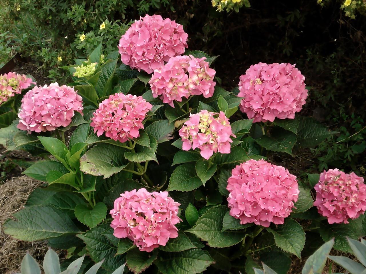 Можно ли доливать антифриз по цвету