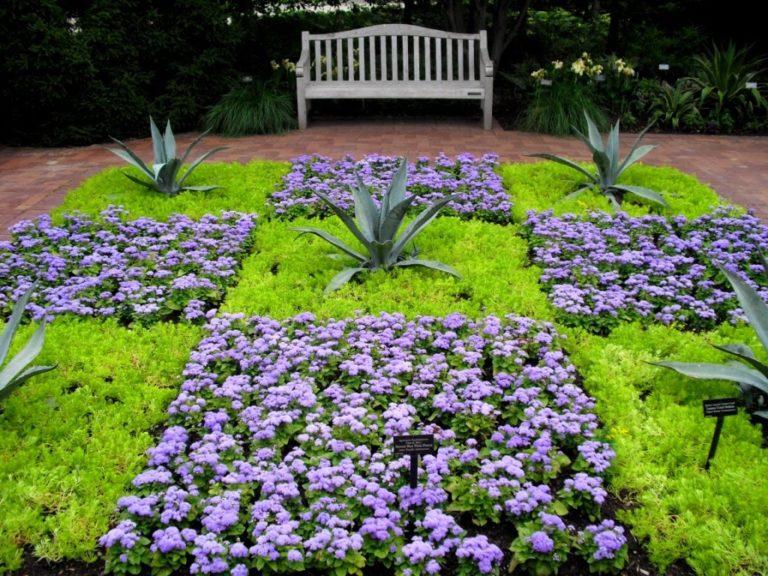 Рассада многолетних цветов для клумбы 34