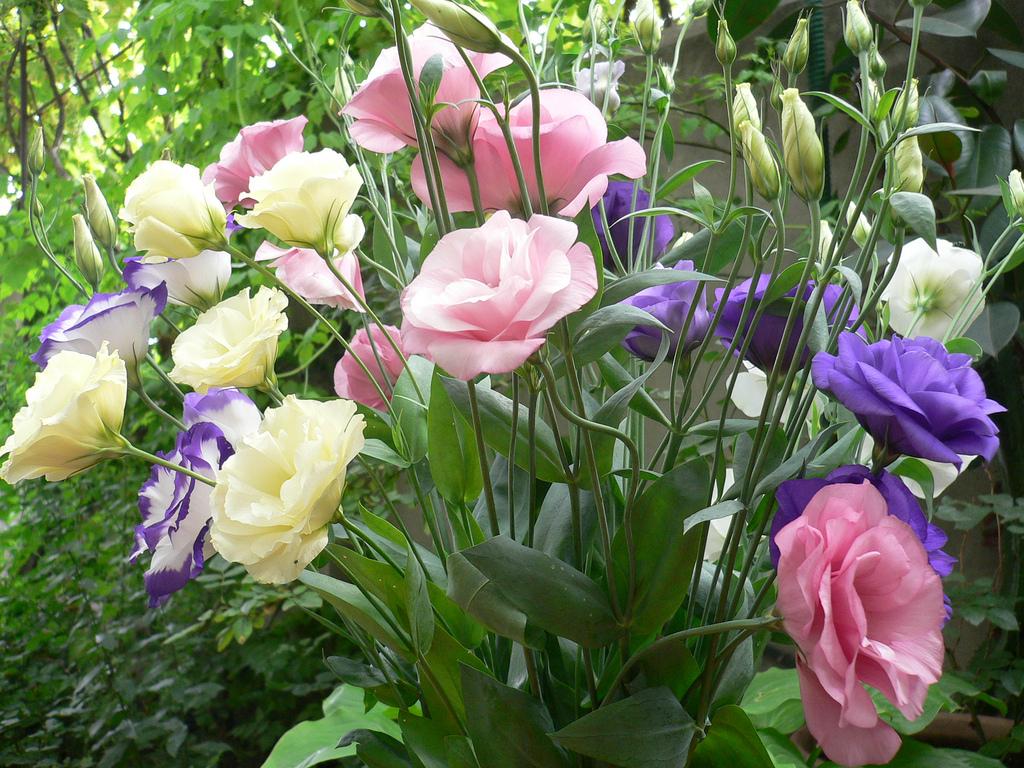 Какие вырастить цветы в саду