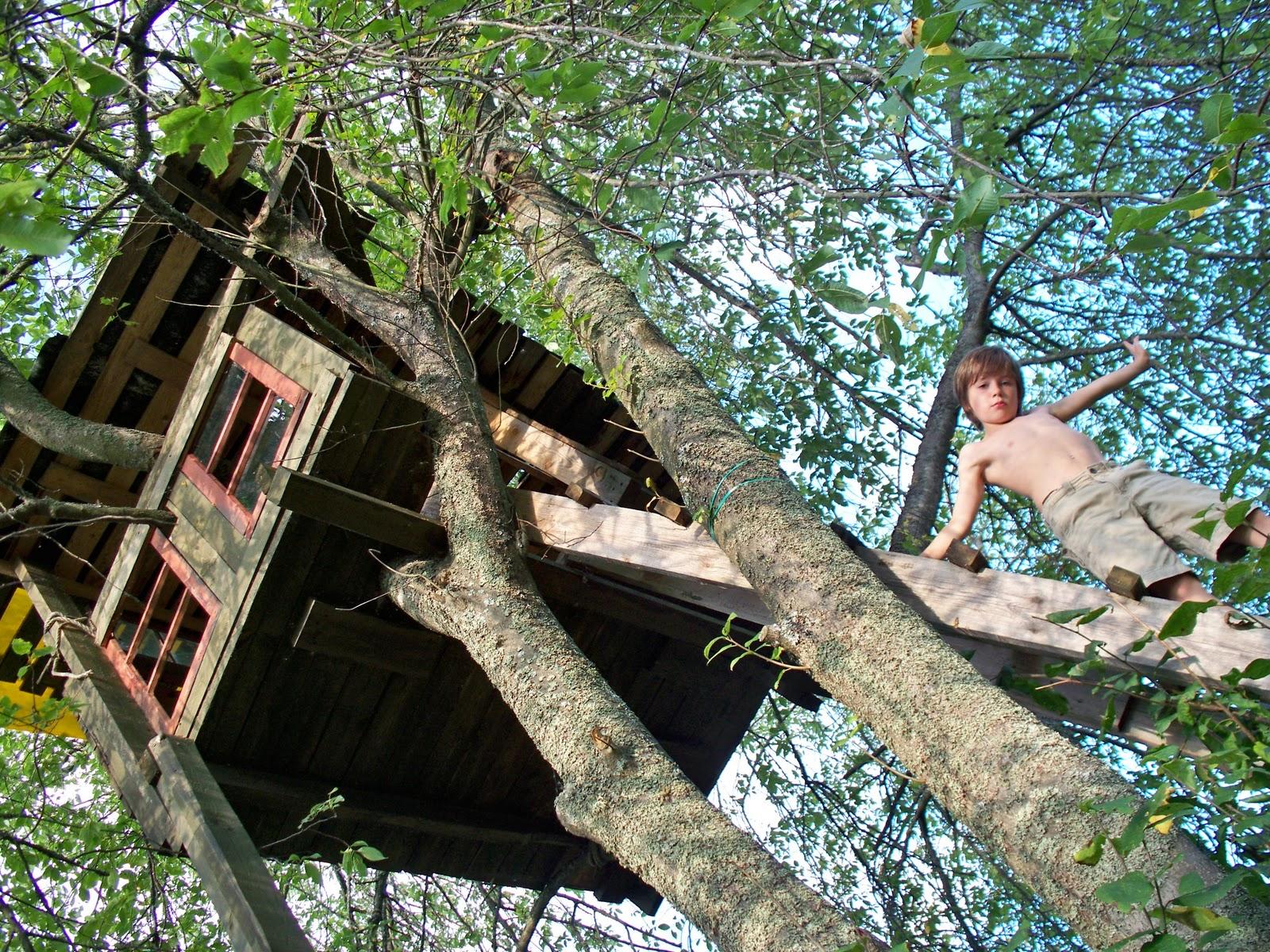 Сделать чертежи своими руками дом на дереве фото 151