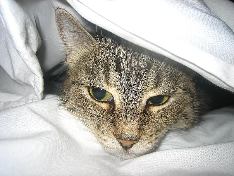 Кашель у кошки: причины, методы лечения, осложнения