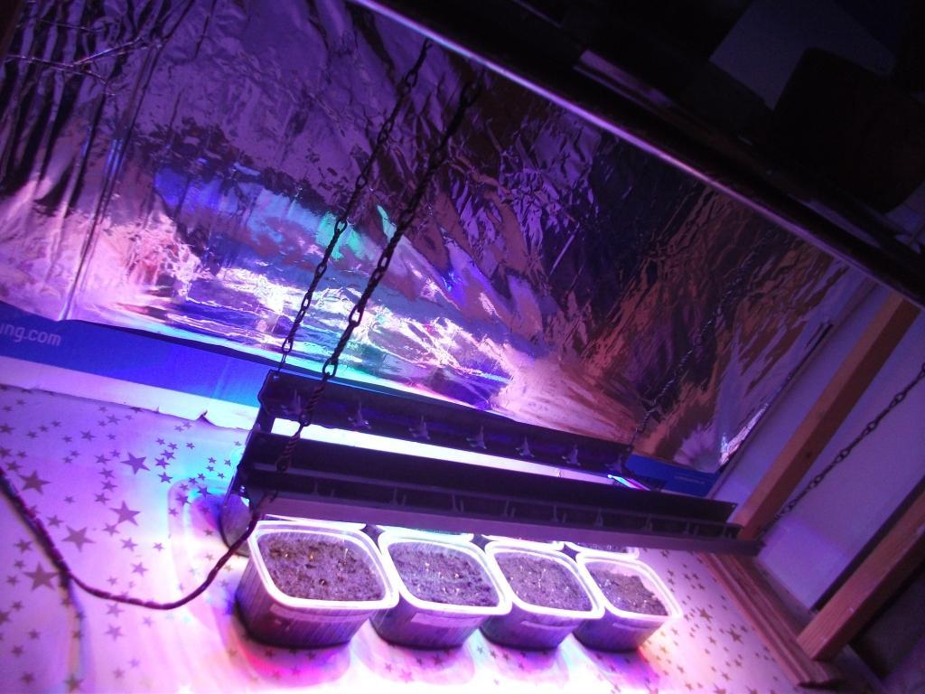 Как сделать подсветку для растений своими руками