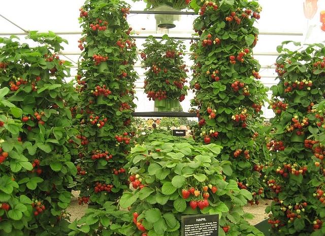выращивание цветов круглый год в открытом грунте тому