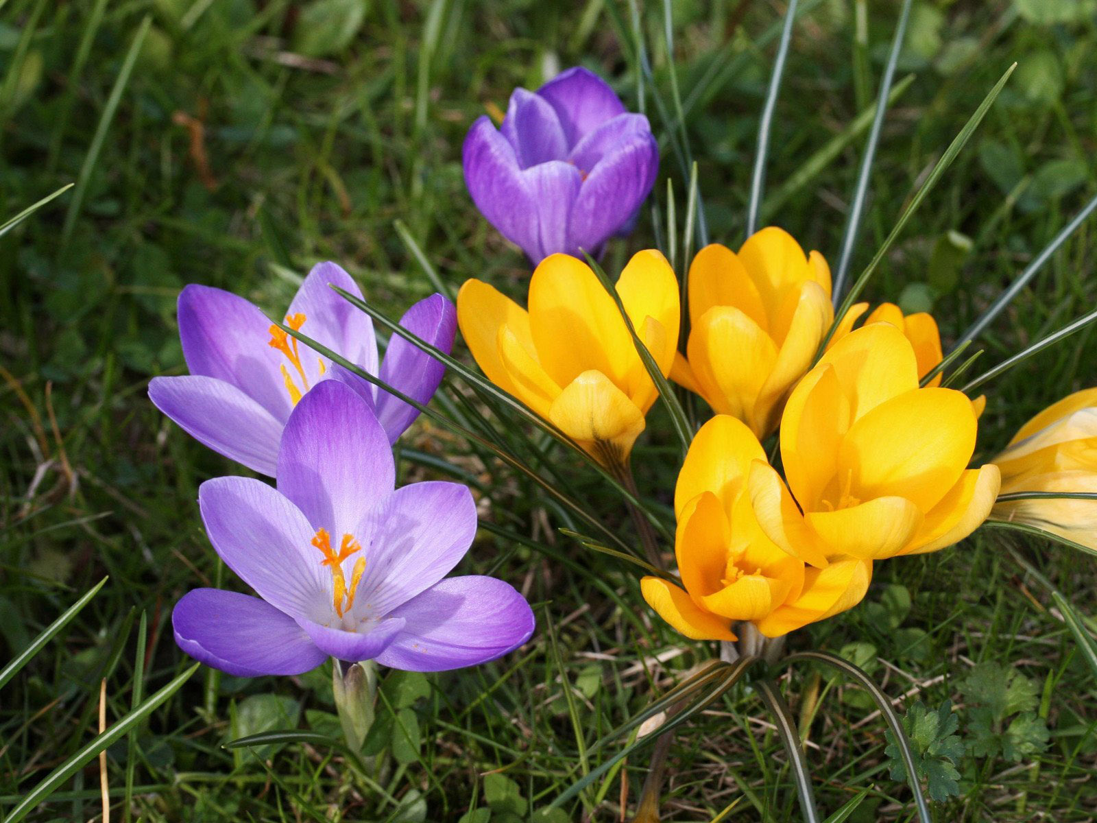 В день учителя цветы своими руками 625