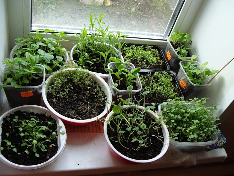 Выращивание цветов в комнатных условиях