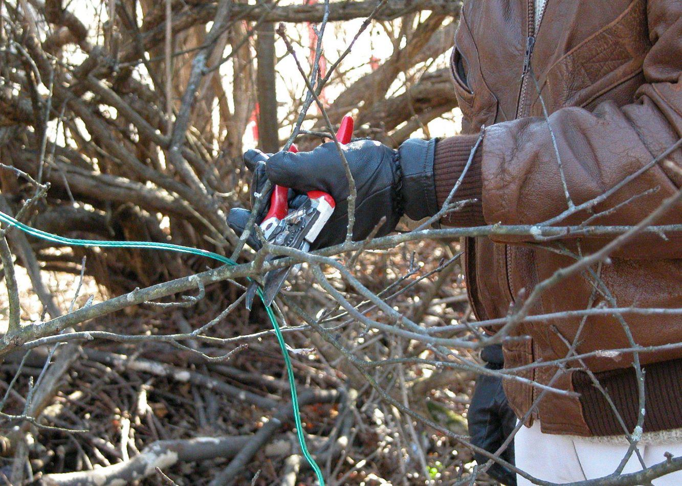 Как сделать из дерево обрезка 205