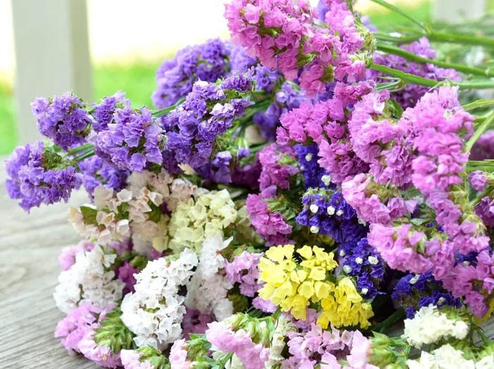Сухоцветы статица выращивание 84