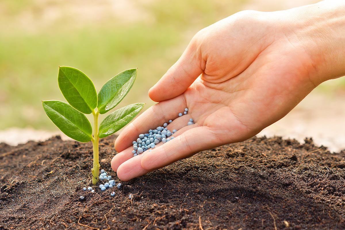 beej bachao andolan save the seed