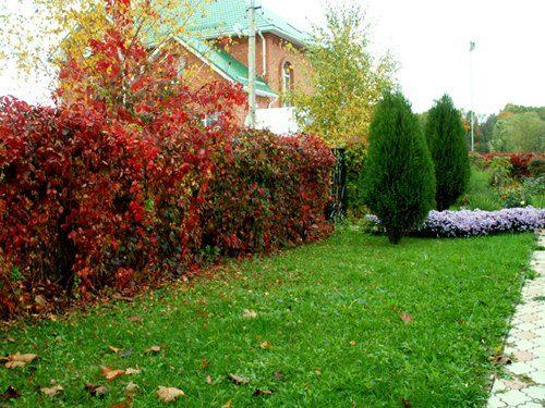 Какие кустарники и деревья можно сажать летом 7