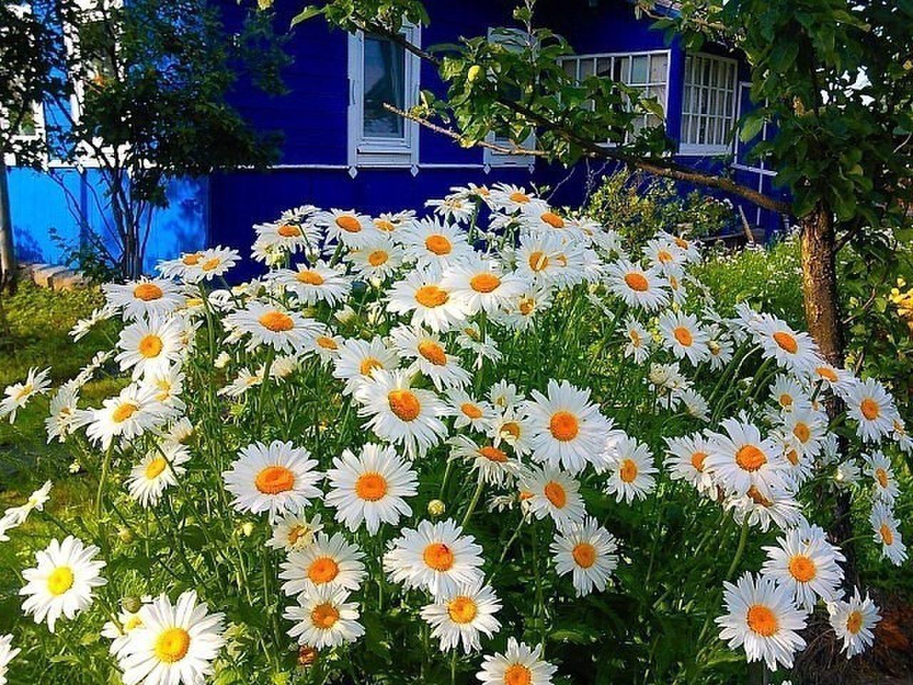 Реальные цветов на дачи