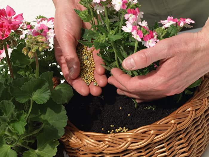 Чем поливать цветы в домашних условиях 548