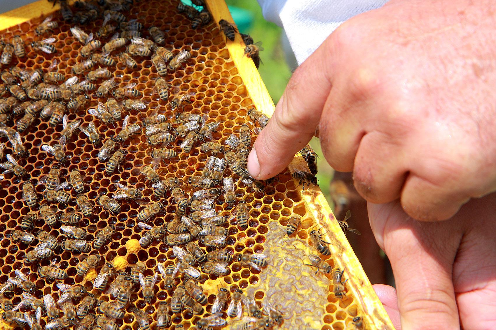 Как сделать улик лежак для пчел 25