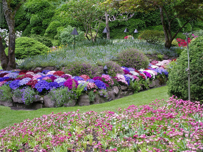 Цветы в саду многолетники фото