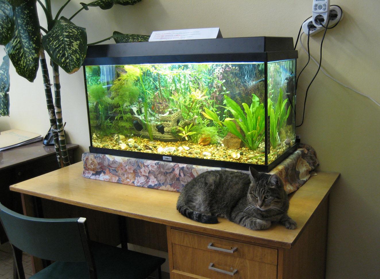 Чем сделать аквариум своими руками 544