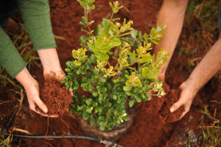 Как сажать кустарники и цветы вместе