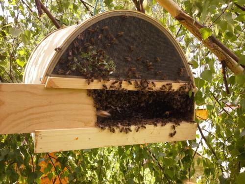 Видео пчеловодство своими руками