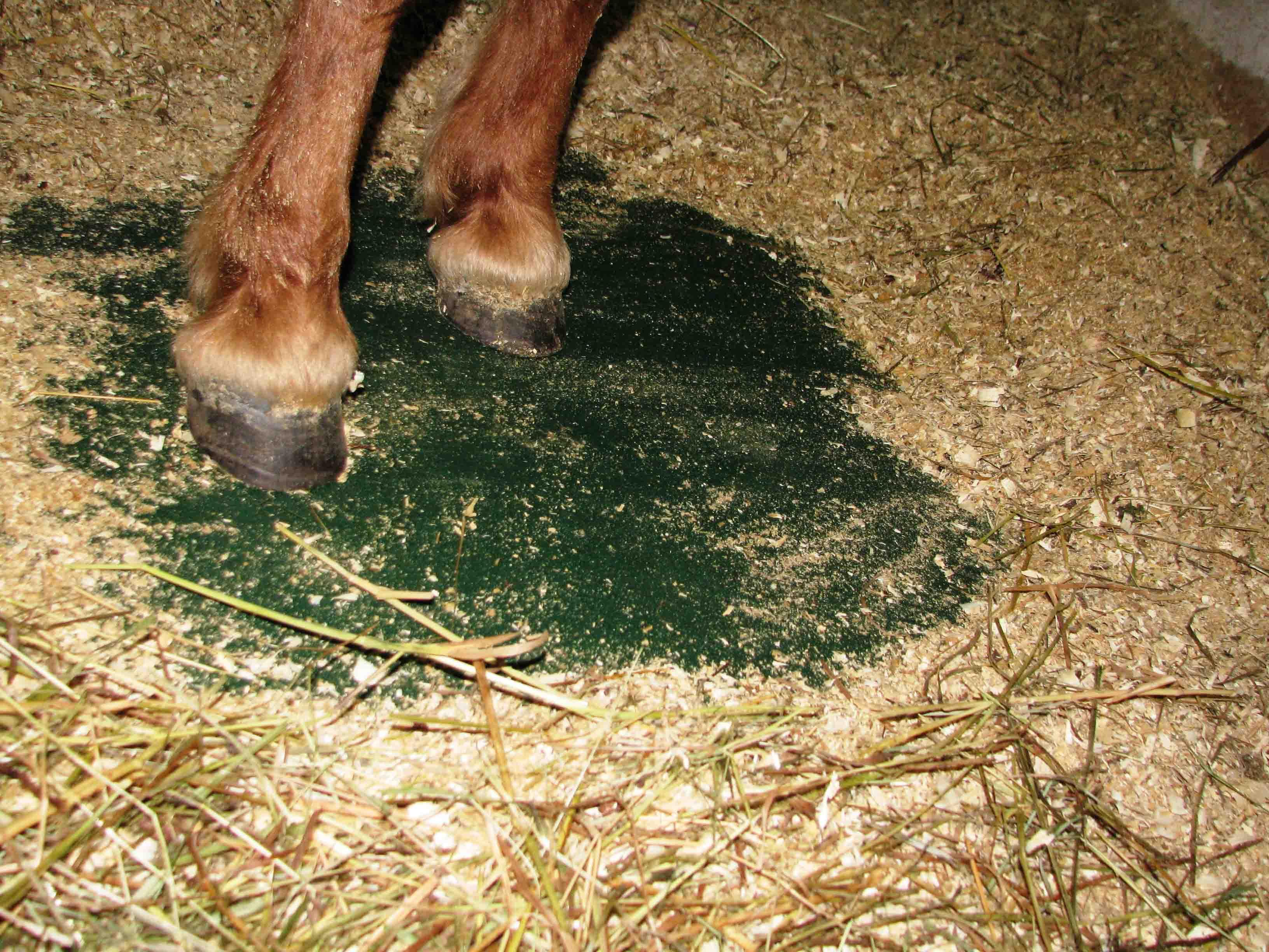 Как сделать кормушку для лошади фото 443