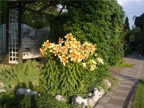 Топиарий из гофрированных роз