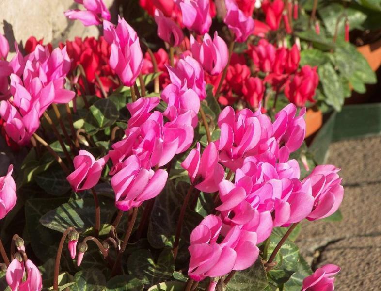 Садовые цветы: розы, тюльпаны, нарциссы