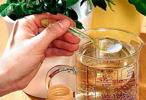 термобелье касторка для комнатных растений как подкормка белье или гибридное