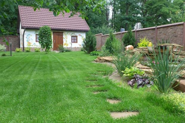 Фото газон своими руками на даче фото 32
