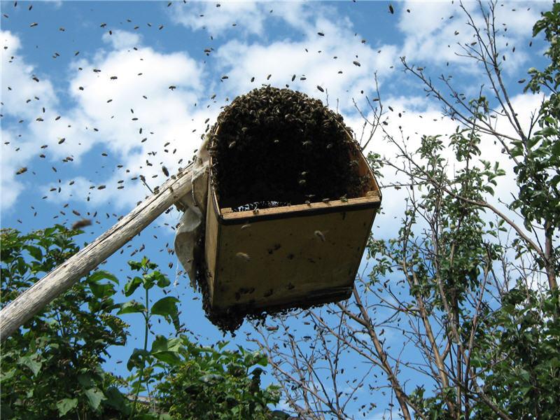 Роевни для пчёл