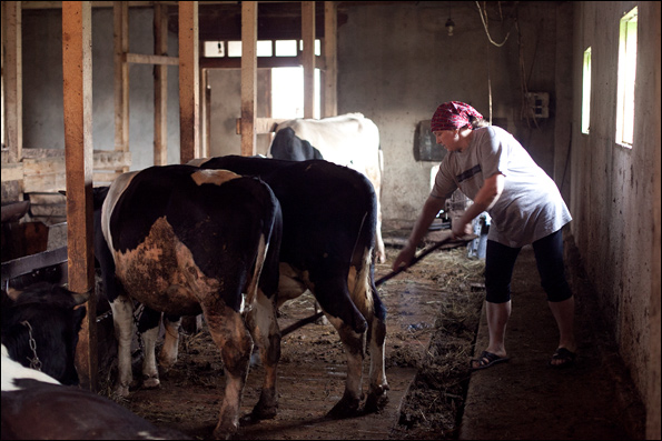 Сарай для коровы своими руками