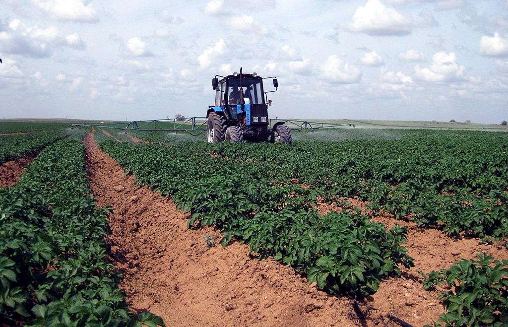 Выращивание картофеля в промышленных масштабах бизнес 68