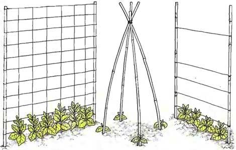 Как сделать опору для фасоли