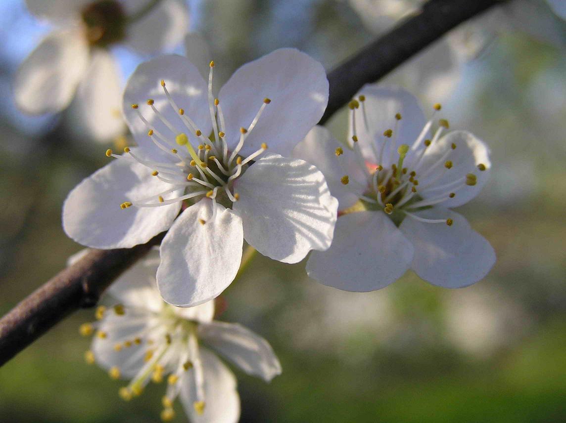 Цвет айвори цветы