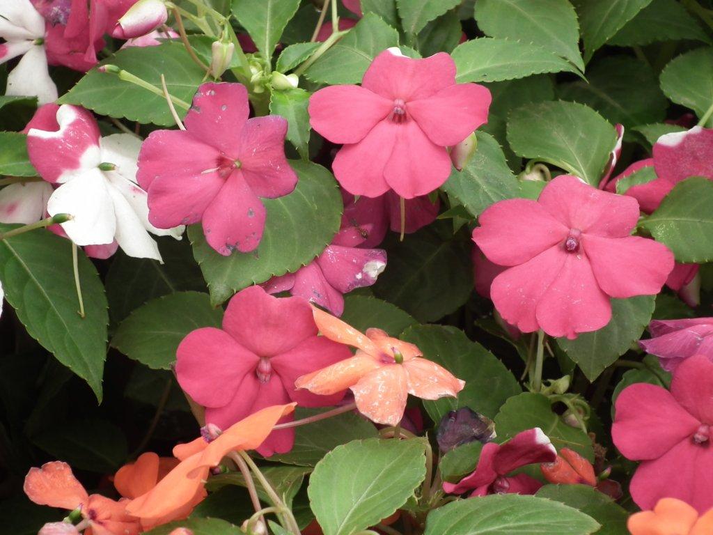 Как сделать картину из цветов канзаши своими руками 3