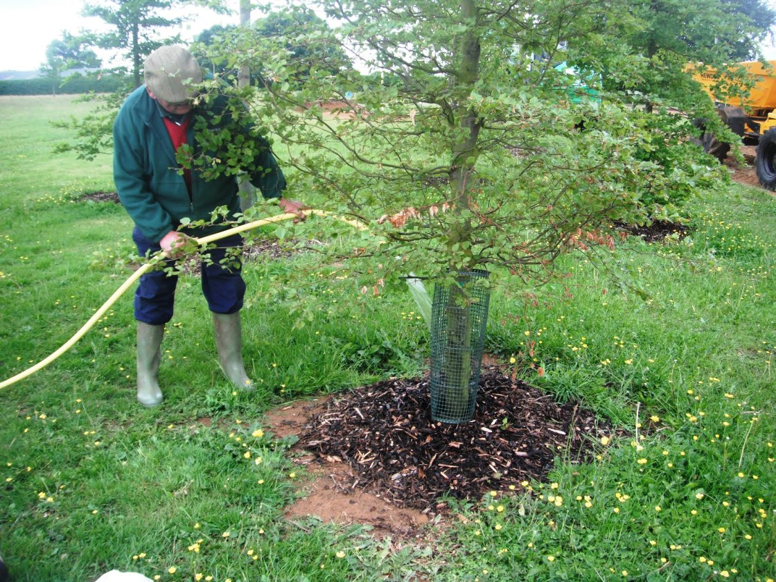 Как сделать полив деревьев