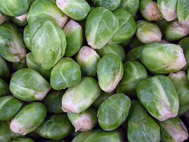Капуста брюссельская фото выращивание и уход в открытом грунте 25