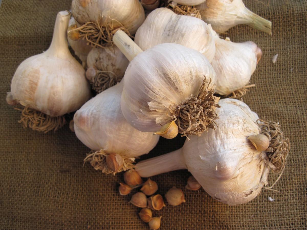 Как правильно сажать лук севок 1