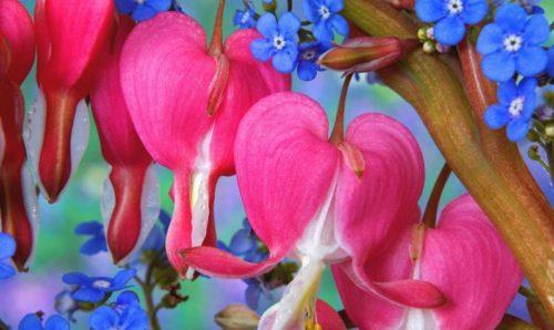 flowers_459-2560x1600
