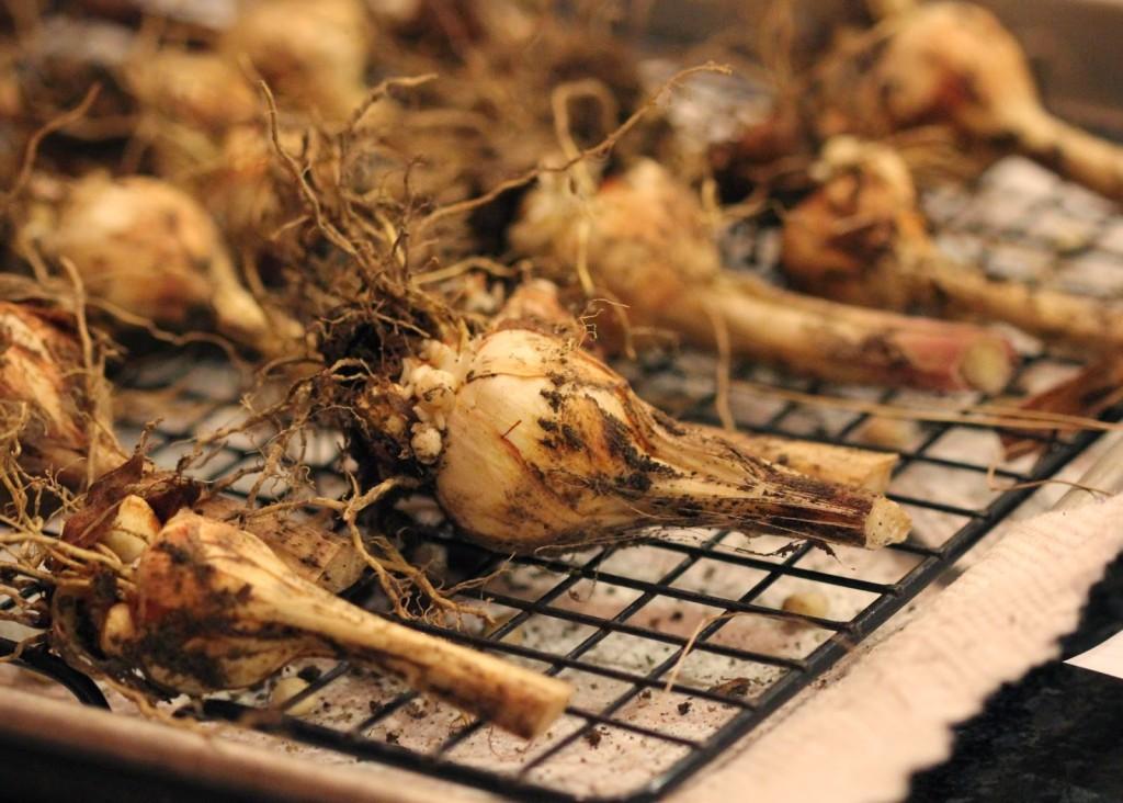 Гладиолусы выращивание хранение луковиц 14