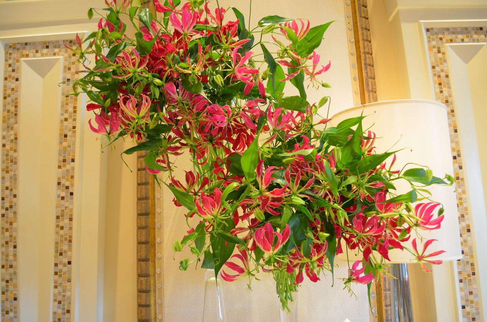 Комнатные цветы лиановидные фото и названия