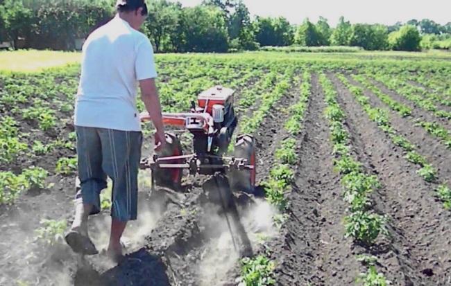 посадка и окучивание картофеля мотоблоком, инструкция и видео