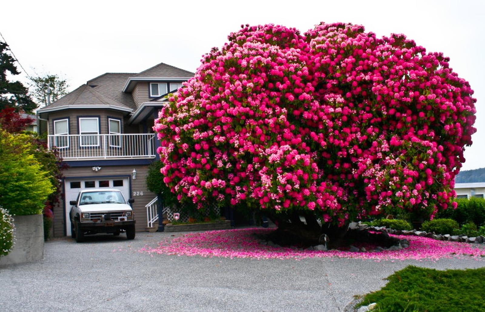 Фото красивых цветов кустарников