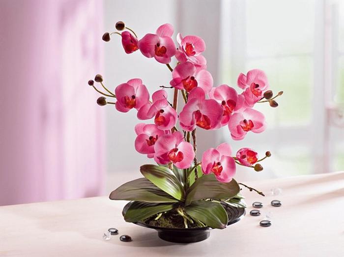 Картинки по запросу орхидея уход в домашних условиях