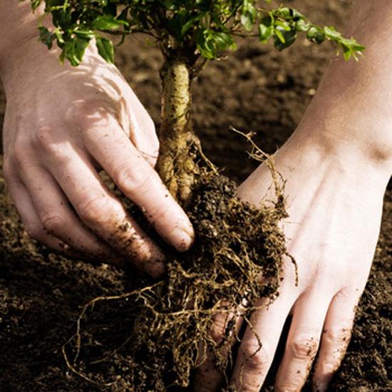 Во сне сажать маленькое дерево 94