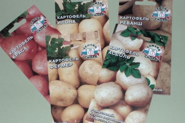вырастить картофель из семян туры остров Искья