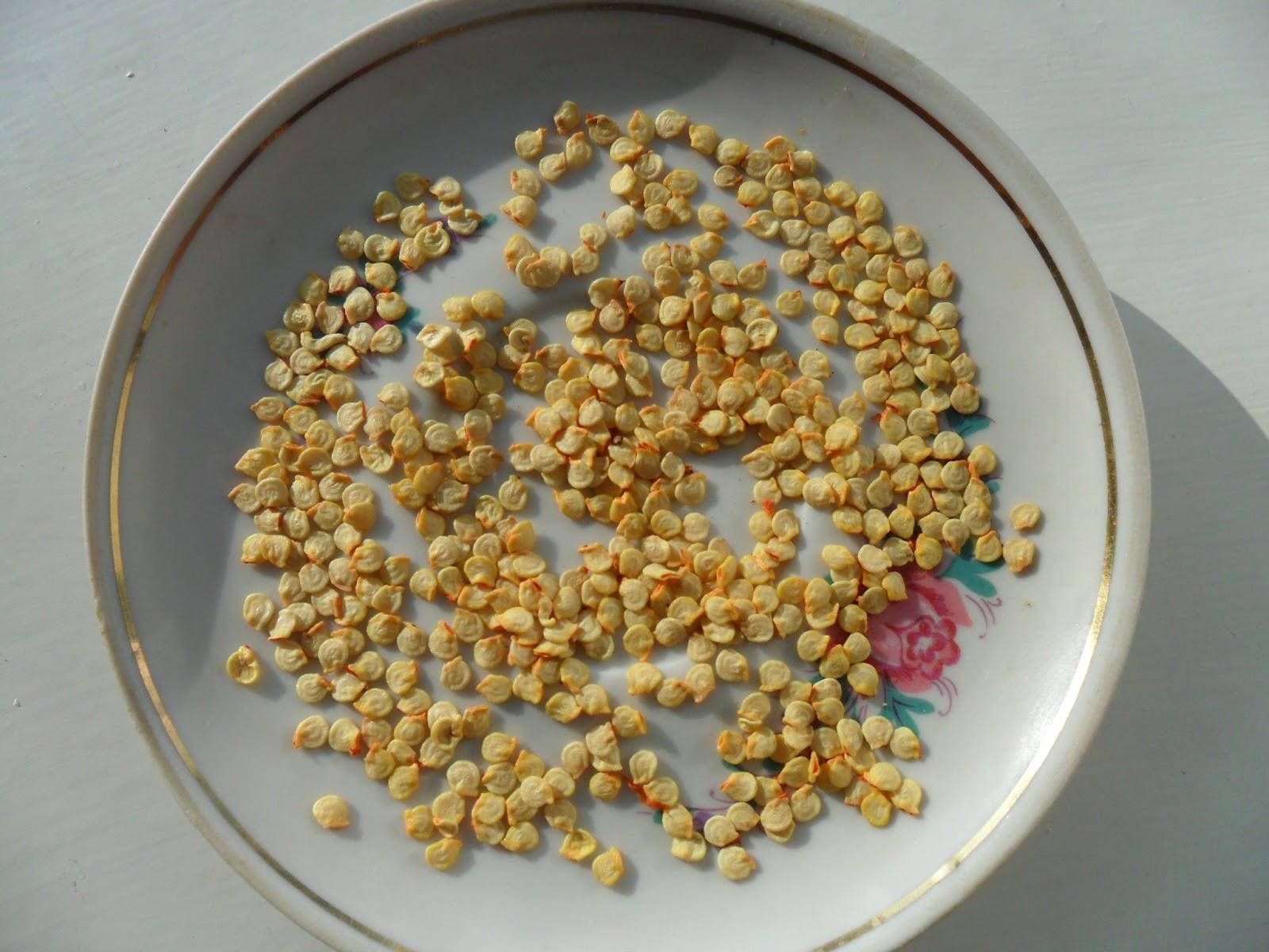 Можно ли сажать перец из своих семян 200