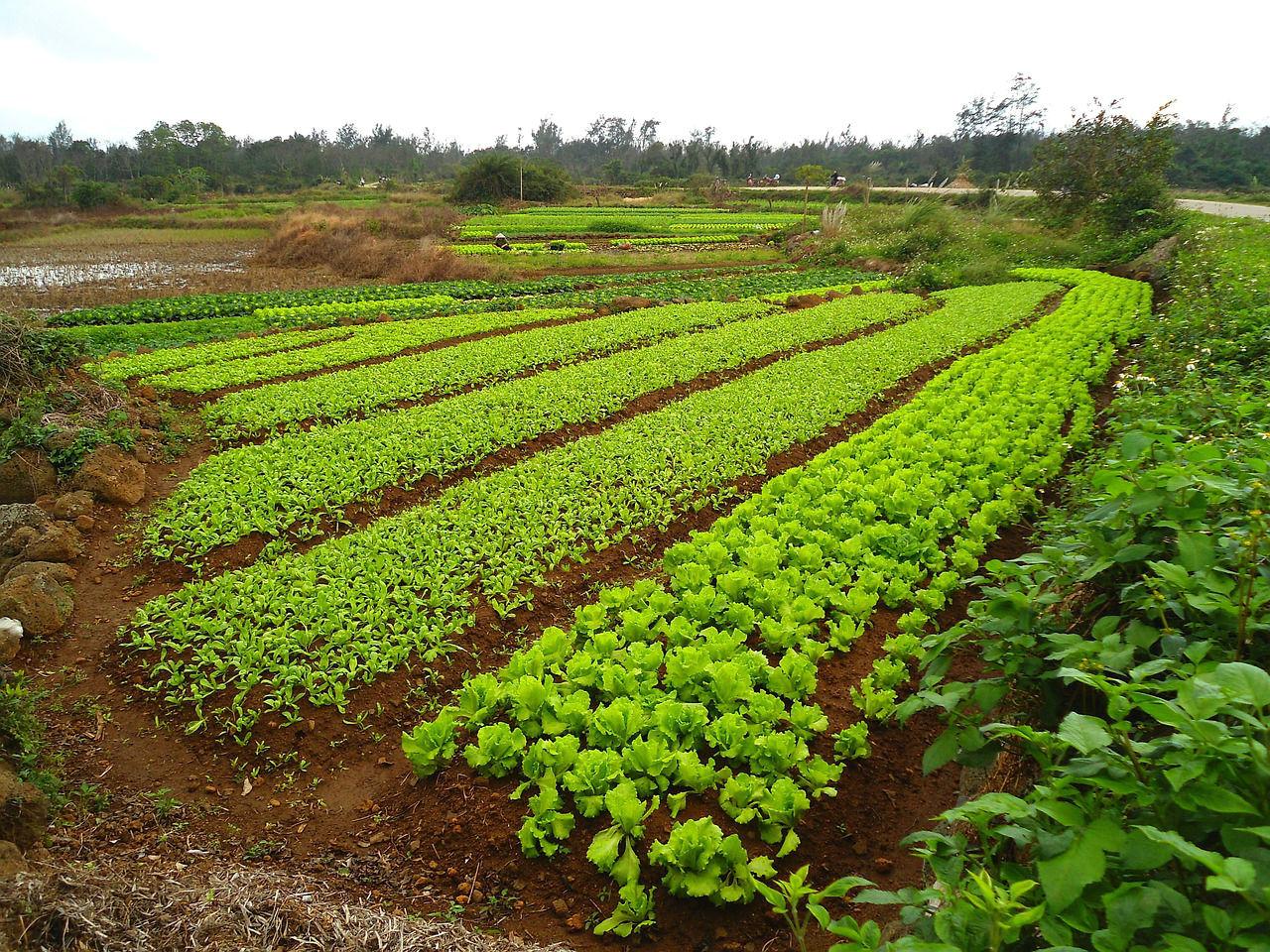 Сидераты как удобрения - когда сеять, какие лучше выбрать 87
