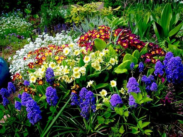 Многолетние цветы уход за ними 123