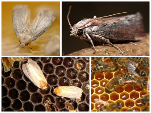 Рамки для пчел: конструкция, размеры