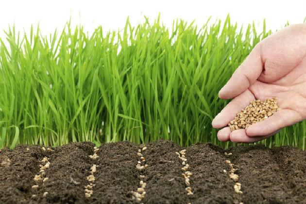 Сидераты: назначение, перечень растений и выращивание