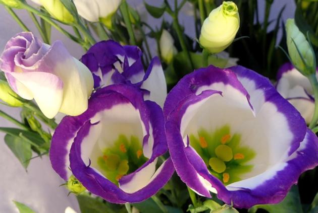 Фото комнатных цветов и садовых растений и их названия